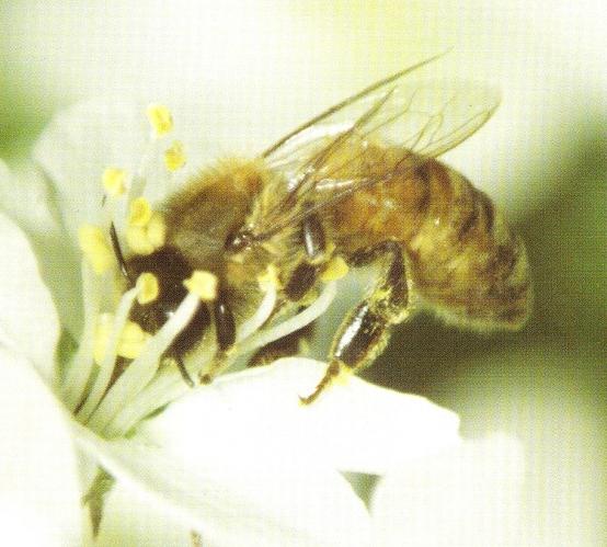 bee grant
