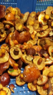 From the mushroom stall